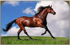 equity-advisory-js-equine